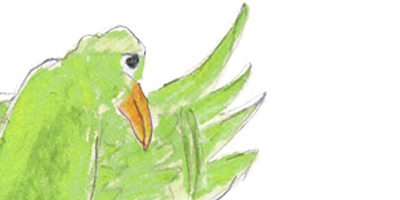 Tieteen päivien 2015 toisen graafikon, Tiina Pystysen, piirtämä vihreä lintu.